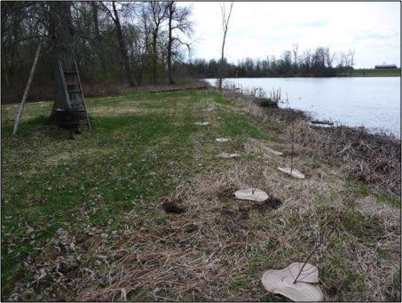 Shoreline Naturalization Project- Before