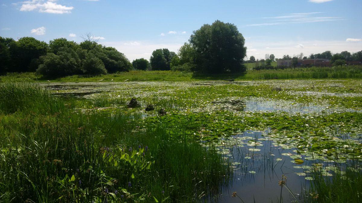 Brewer-Pond