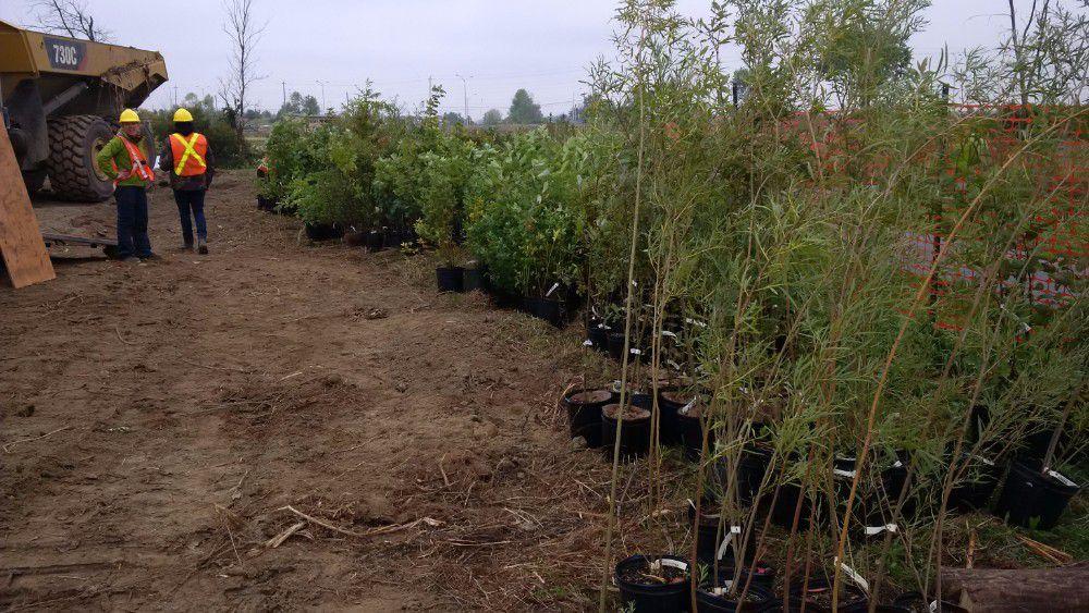 9-planting