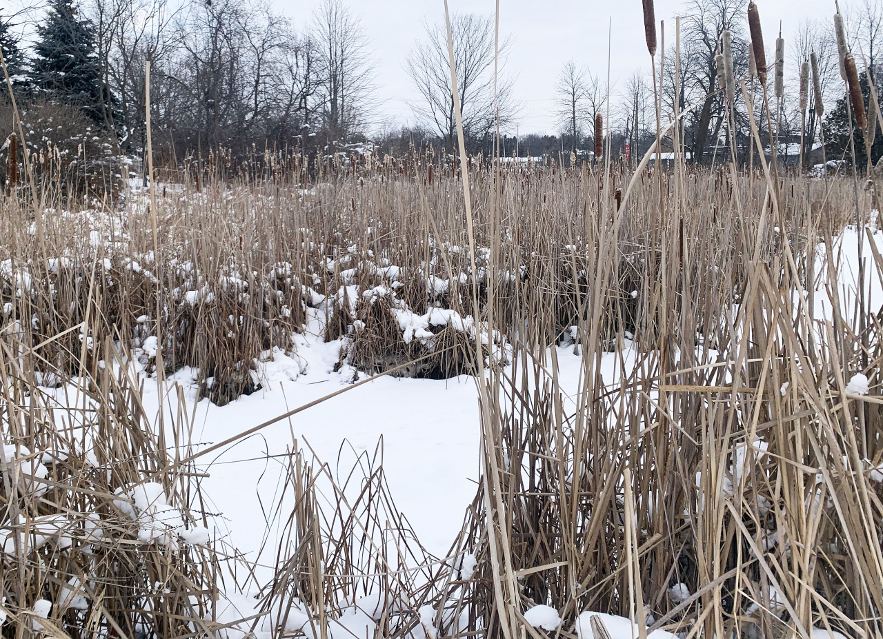 Winter wetlands: what's happening under the ice?