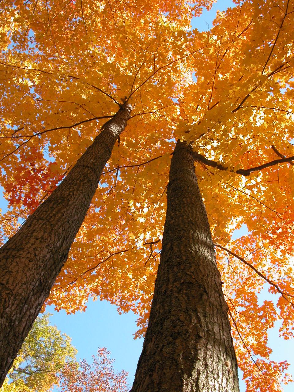 Beyond Spy Rock: Three fabulous fall hikes at Foley Mountain