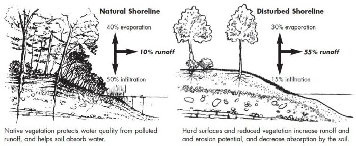 Benefits Natural_Shoreline