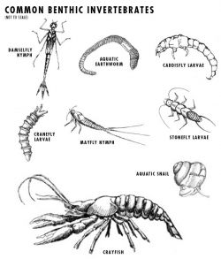 common inverts