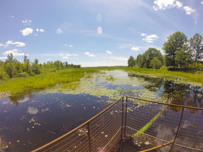 Work to Begin on Hutton Creek Wetland Restoration