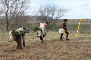 255,000 trees planted this spring – bringing RVCA total to 6.6 million
