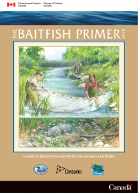 The Baitfish Primer