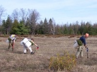 One Tree Planted Supports the Rideau Valley Conservation Authority in Planting 70,000 Trees