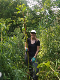 Volunteers remove Himalayan Balsam along Taylor Creek.