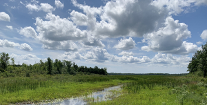 Hutton Creek Marsh getting makeover thanks to generous grant