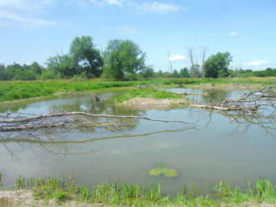 Wildlife reclaiming restored wetlands near DND campus